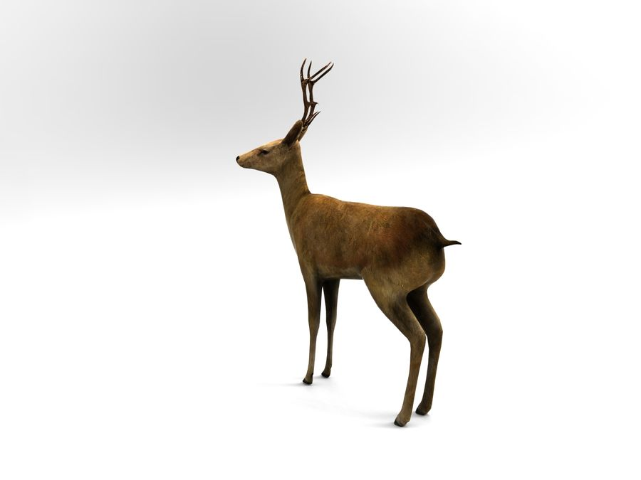 deer rigged royalty-free 3d model - Preview no. 2