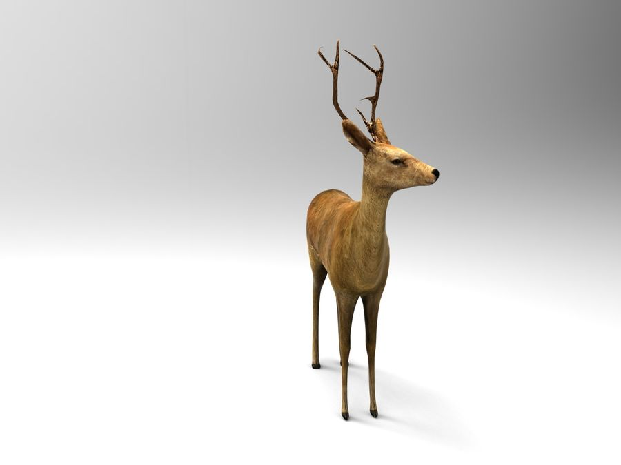 deer rigged royalty-free 3d model - Preview no. 3