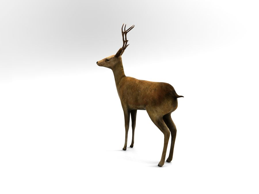 deer rigged royalty-free 3d model - Preview no. 6