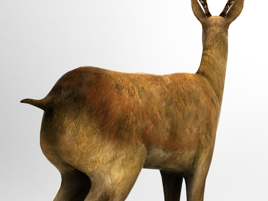deer rigged royalty-free 3d model - Preview no. 11