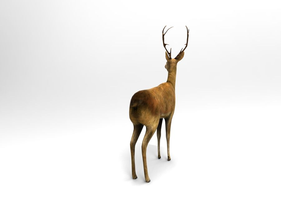 deer rigged royalty-free 3d model - Preview no. 5