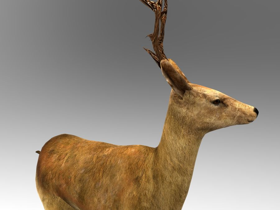 deer rigged royalty-free 3d model - Preview no. 10