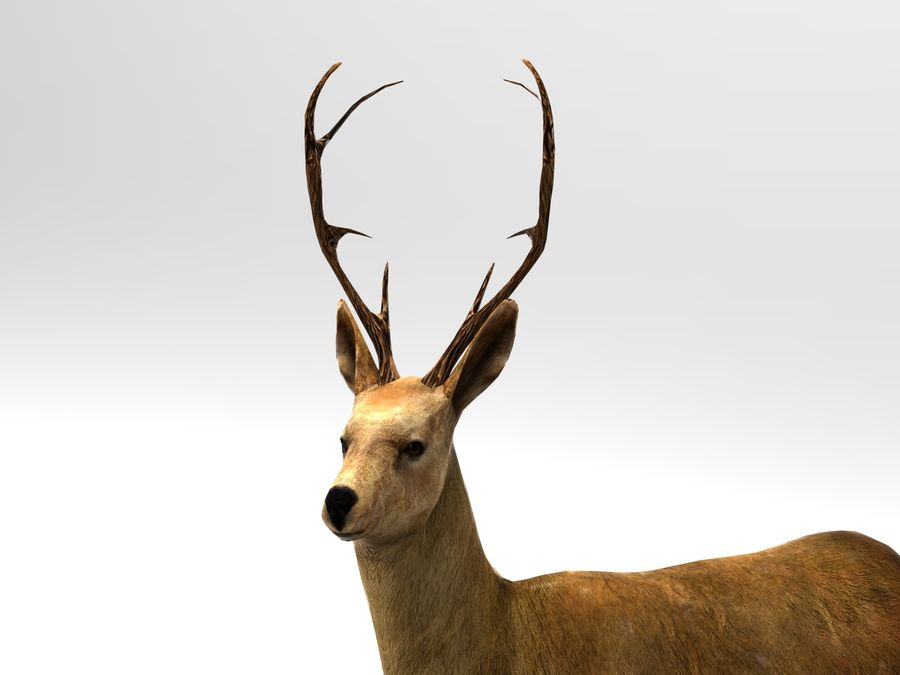 deer rigged royalty-free 3d model - Preview no. 9