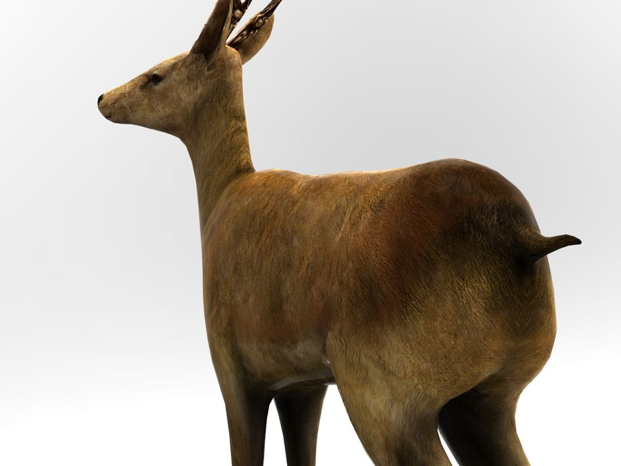 deer rigged royalty-free 3d model - Preview no. 12