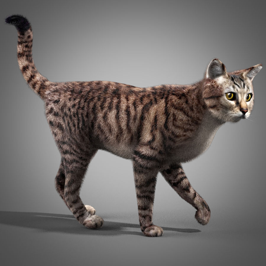 Striped Cat royalty-free 3d model - Preview no. 1