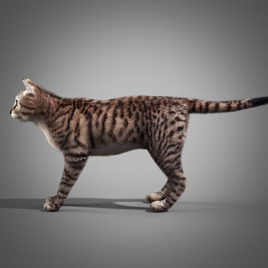 Striped Cat royalty-free 3d model - Preview no. 5
