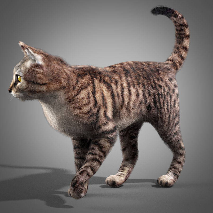 Striped Cat royalty-free 3d model - Preview no. 2