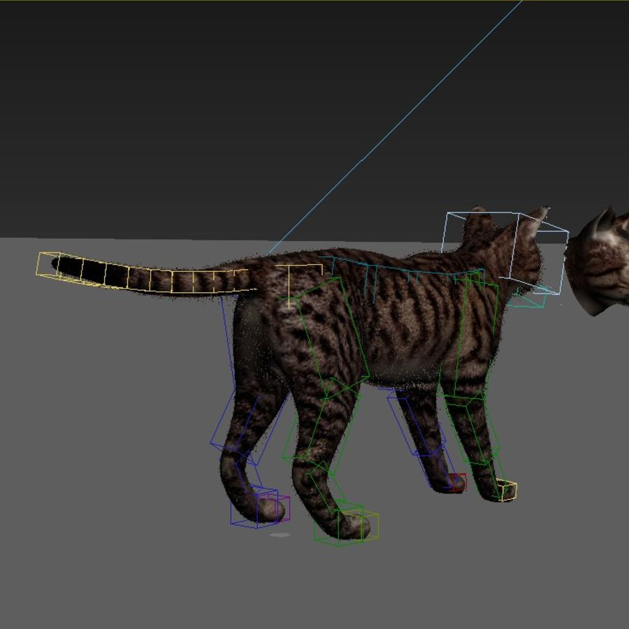 Striped Cat royalty-free 3d model - Preview no. 6