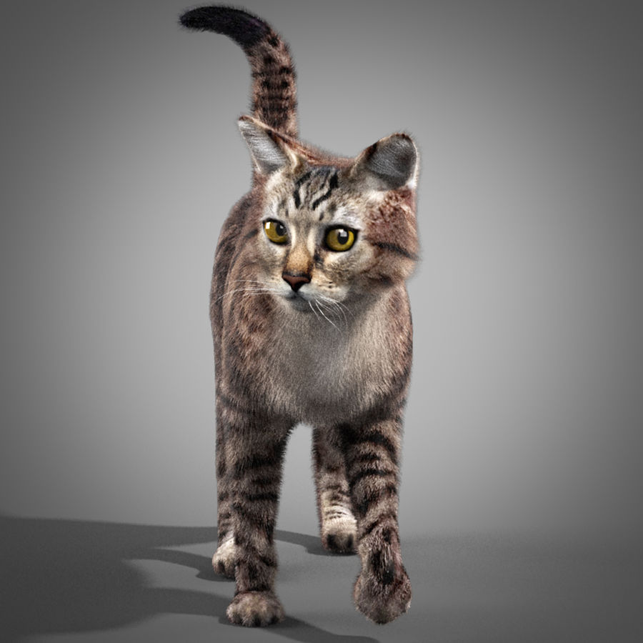 Striped Cat royalty-free 3d model - Preview no. 3