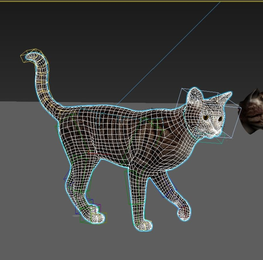 Striped Cat royalty-free 3d model - Preview no. 8