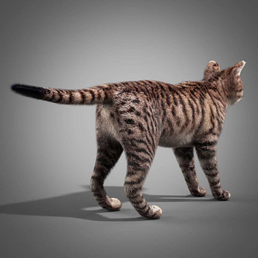 Striped Cat royalty-free 3d model - Preview no. 4