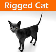 Cat Rigged 3d model