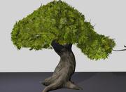 gra w drzewa 3d model