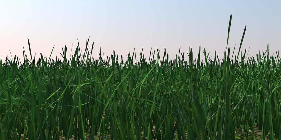 Grass Blades royalty-free 3d model - Preview no. 1