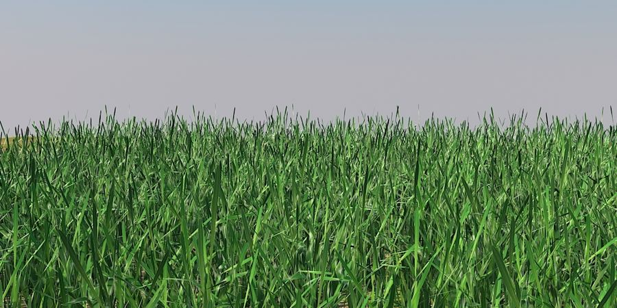 Grass Blades royalty-free 3d model - Preview no. 2