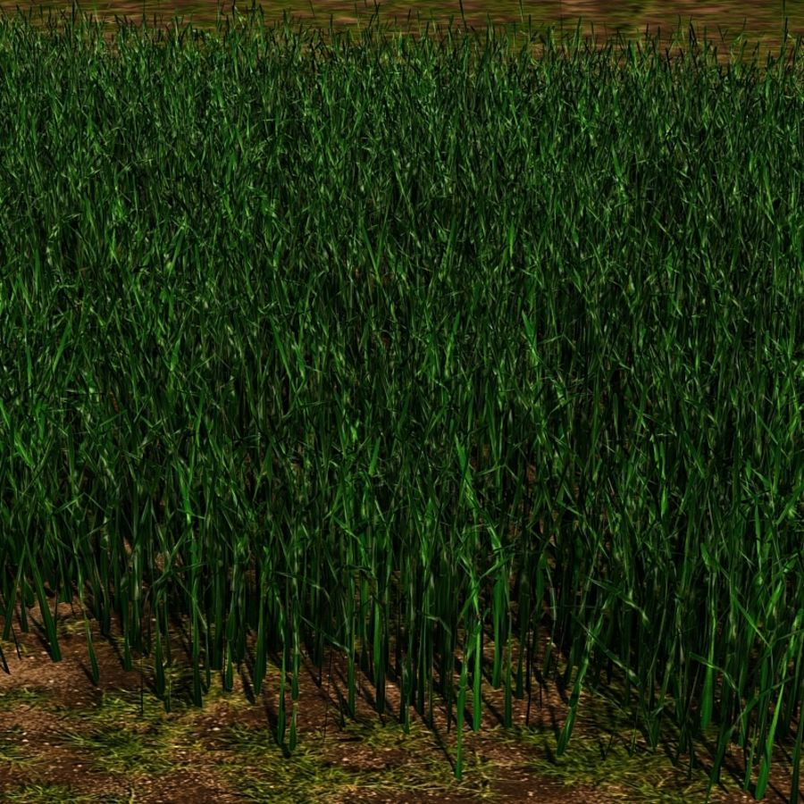 Grass Blades royalty-free 3d model - Preview no. 4