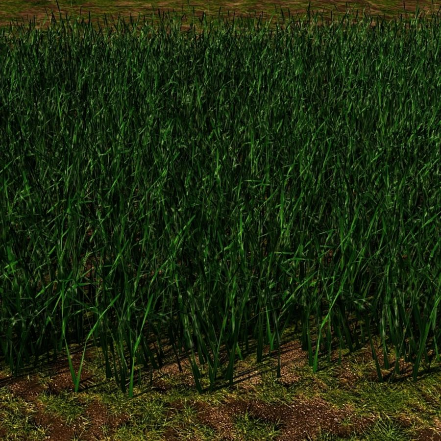 Grass Blades royalty-free 3d model - Preview no. 10