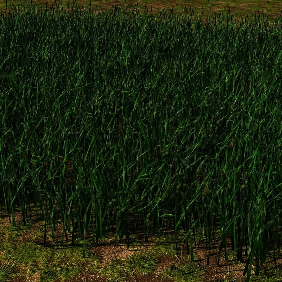 Grass Blades royalty-free 3d model - Preview no. 12