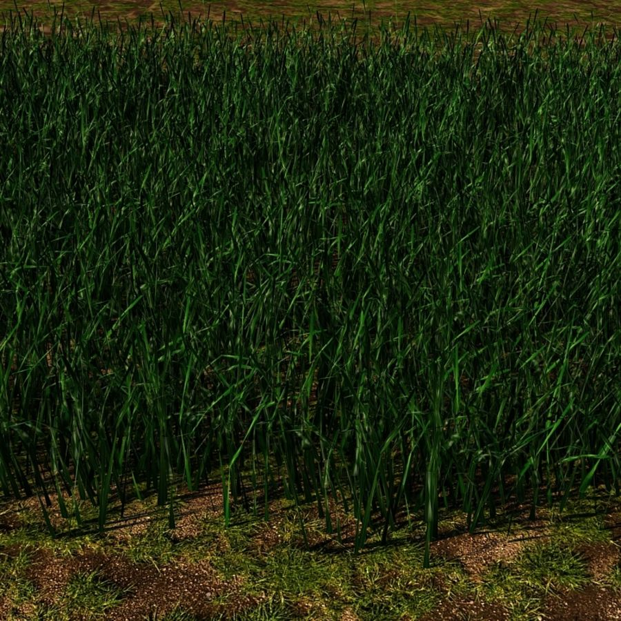 Grass Blades royalty-free 3d model - Preview no. 11