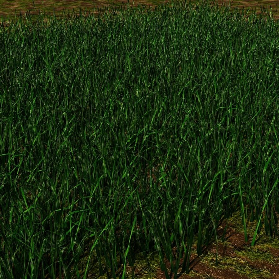 Grass Blades royalty-free 3d model - Preview no. 8
