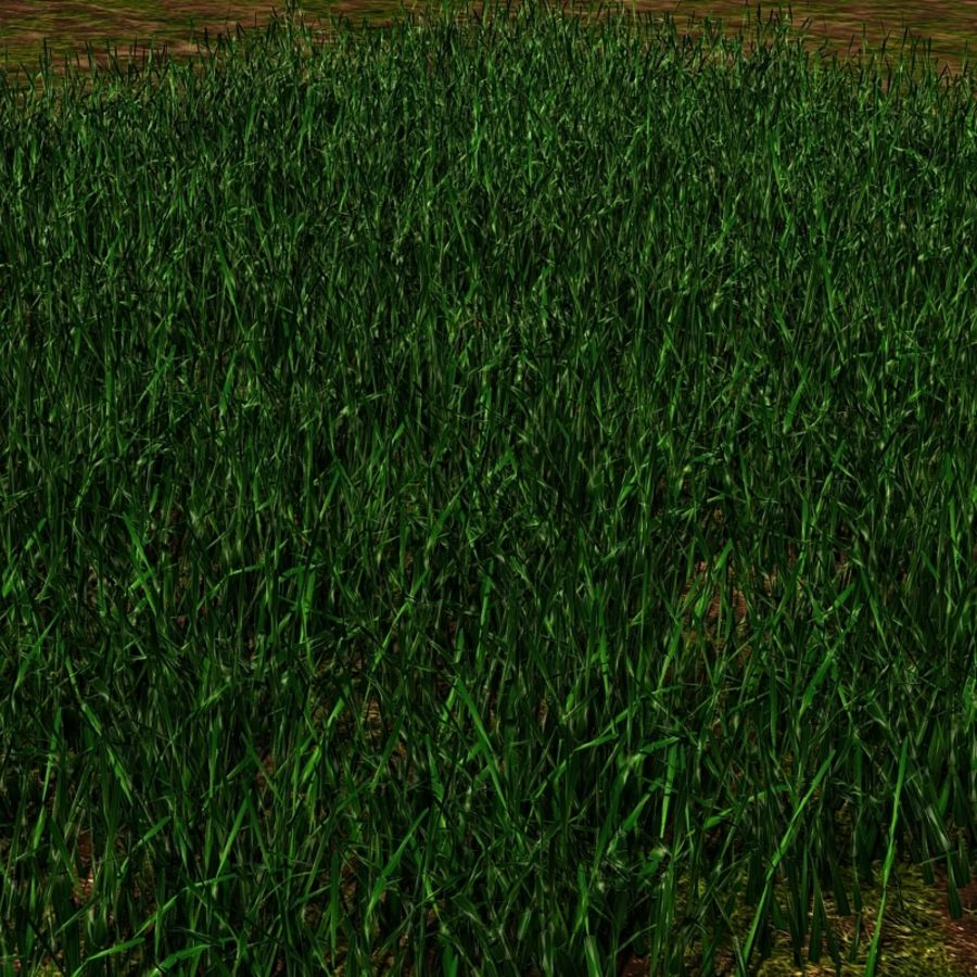Grass Blades royalty-free 3d model - Preview no. 7