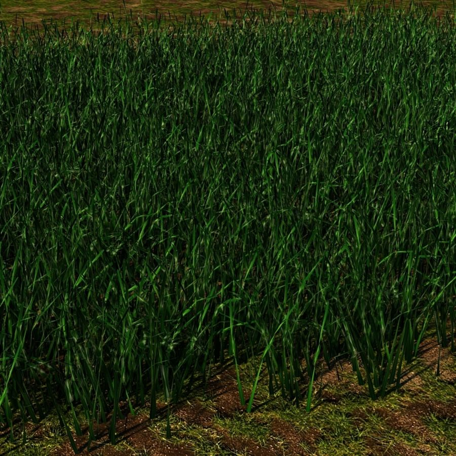 Grass Blades royalty-free 3d model - Preview no. 9