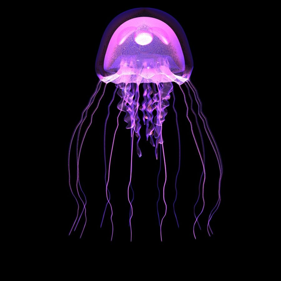 Jellyfish royalty-free 3d model - Preview no. 1