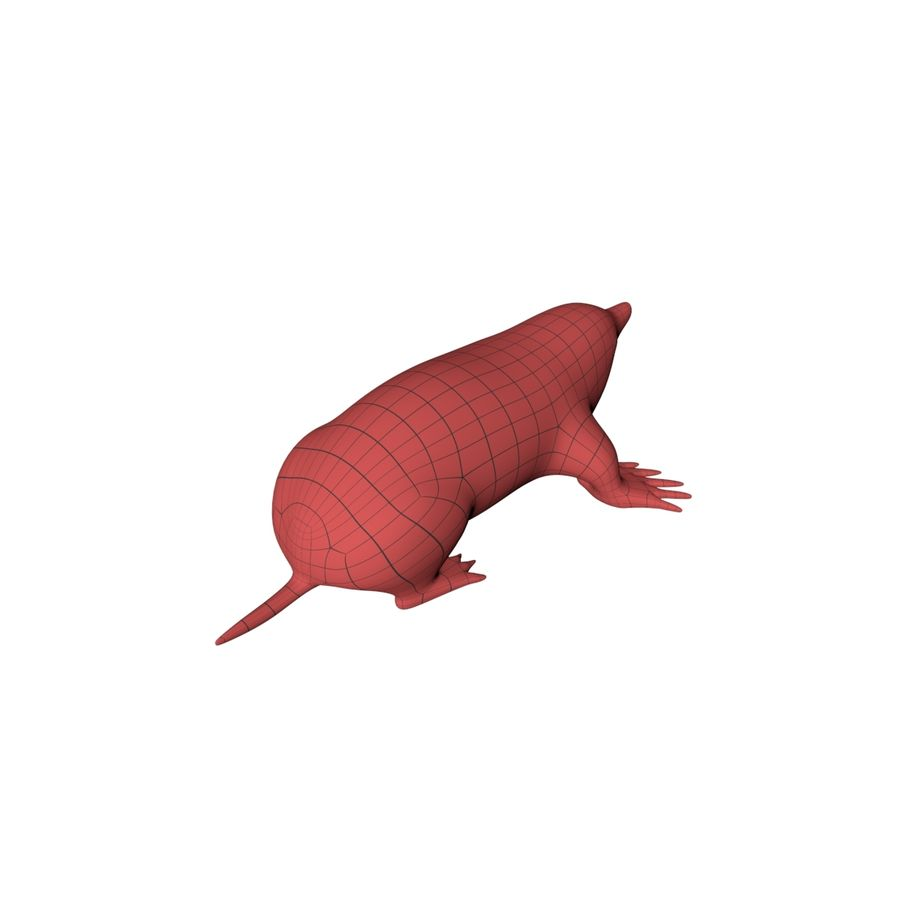 Mole base mesh royalty-free 3d model - Preview no. 7