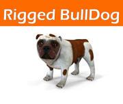 Bulldog Modello truccato 3d model