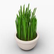 grass in a pot 3d model