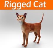 고양이 장비 3d model