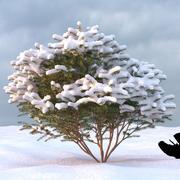 Winter Tree 25 3d model