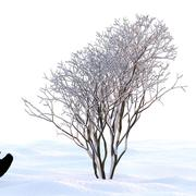 Winterbaum 24 3d model