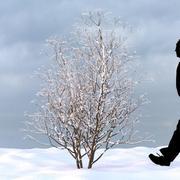 Winter Tree 22 3d model