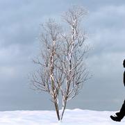 Winter Tree 21 3d model
