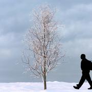 Winter Tree 20 3d model