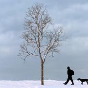 Winter Tree 17 3d model