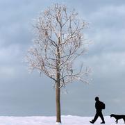 冬の木15 3d model
