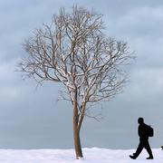 冬の木13 3d model
