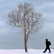 Winter Tree 13 3d model