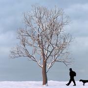 Winter Tree 12 3d model