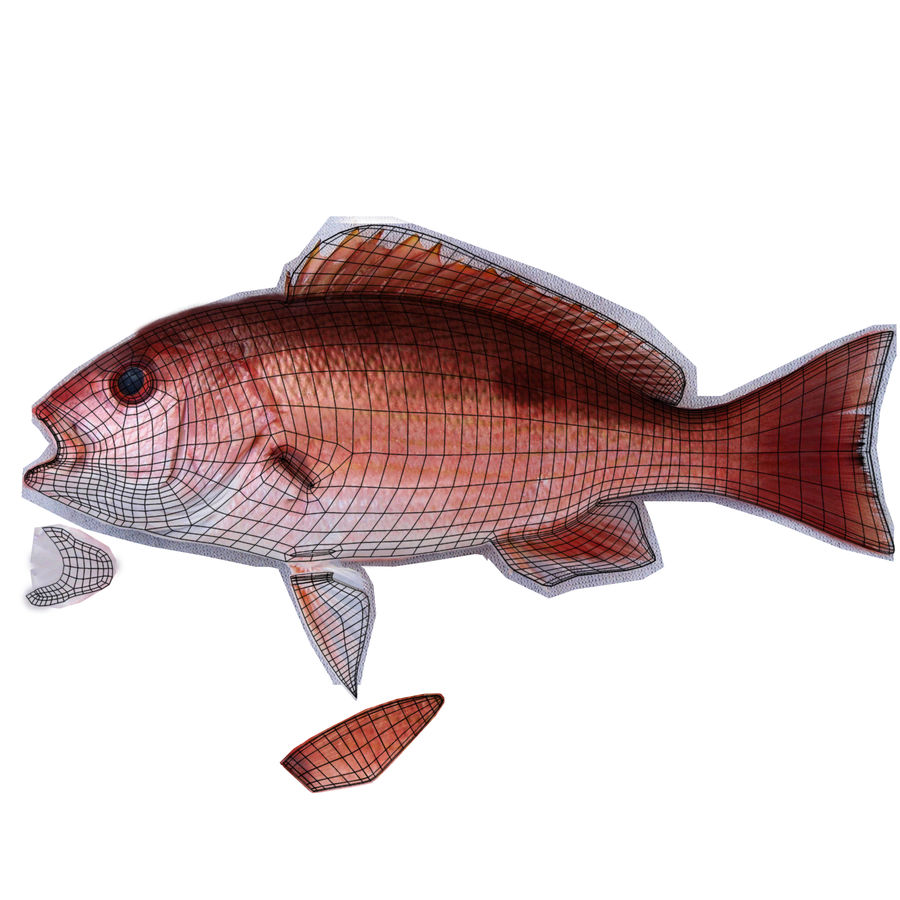 Pacific Red Snapper royalty-free 3d model - Preview no. 9