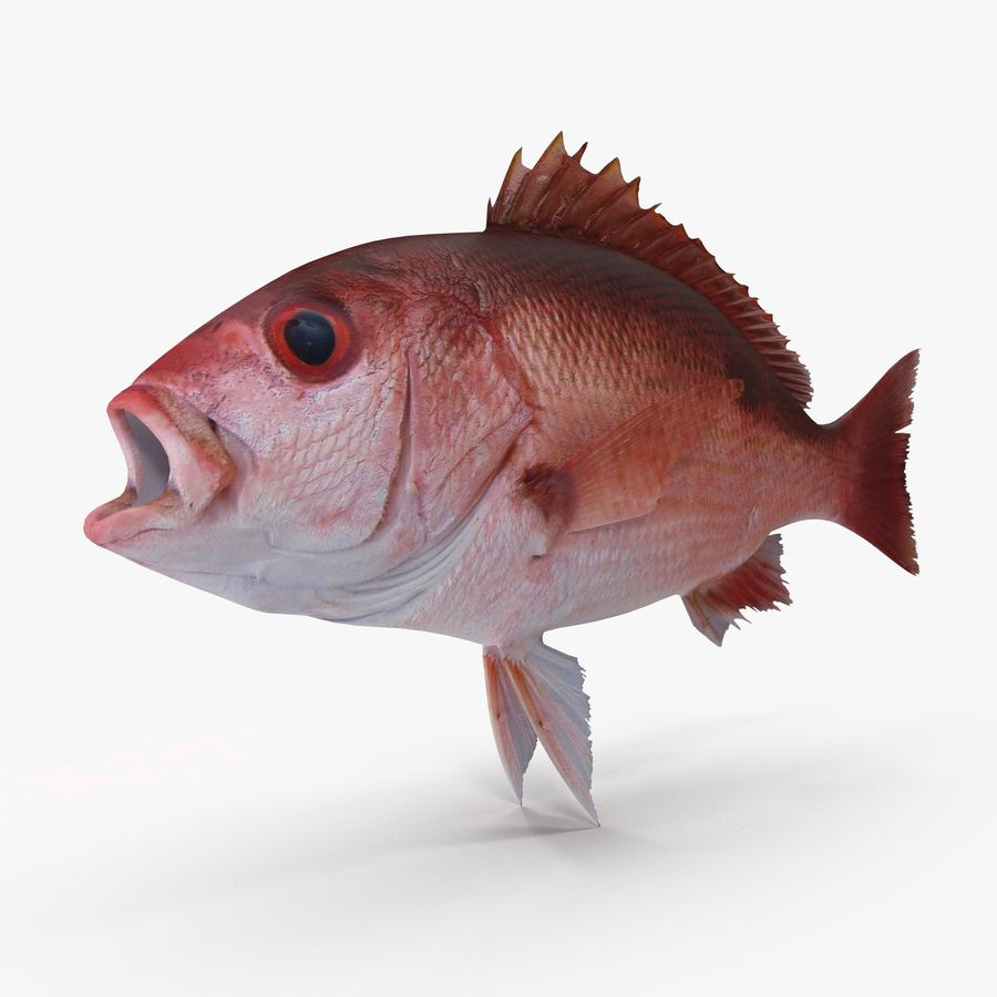 Pacific Red Snapper royalty-free 3d model - Preview no. 2