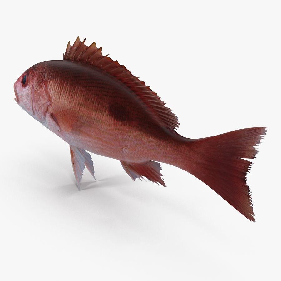 Pacific Red Snapper royalty-free 3d model - Preview no. 4