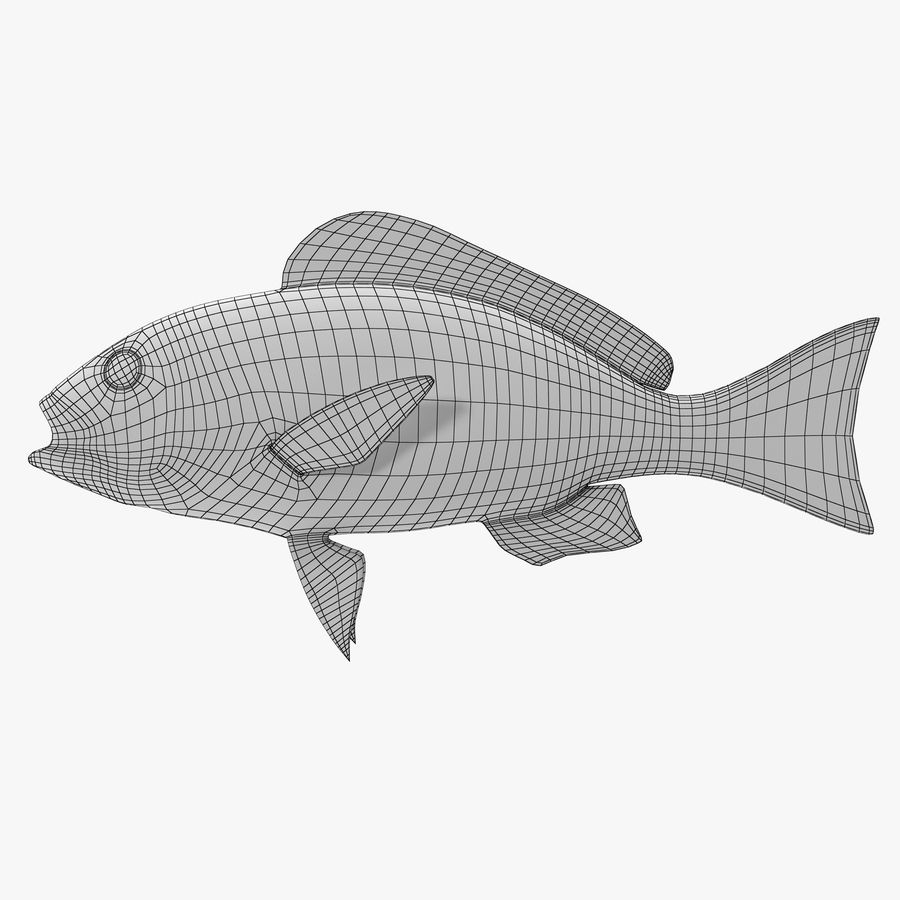 Pacific Red Snapper royalty-free 3d model - Preview no. 7