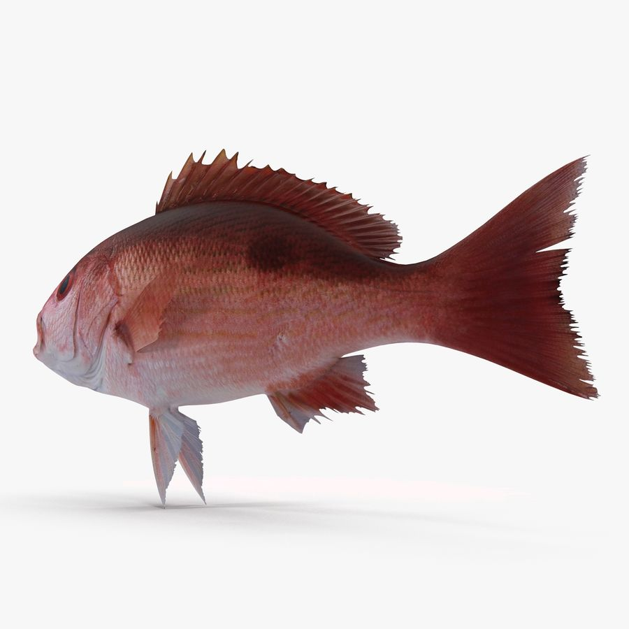 Pacific Red Snapper royalty-free 3d model - Preview no. 3
