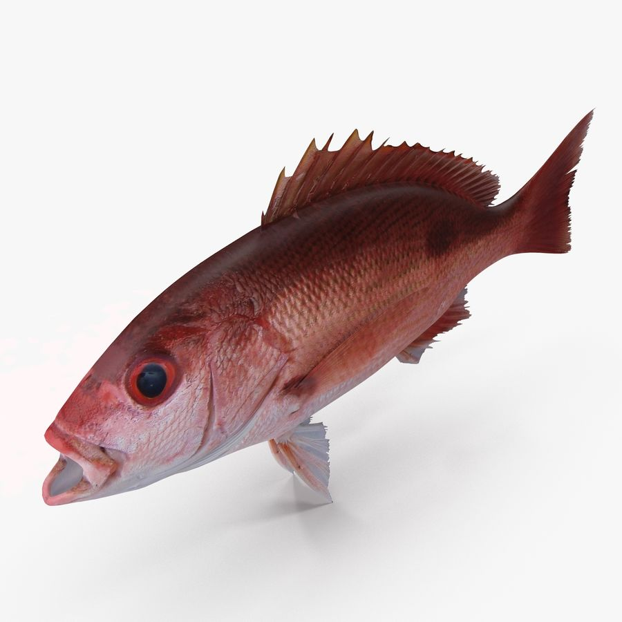 Pacific Red Snapper royalty-free 3d model - Preview no. 5