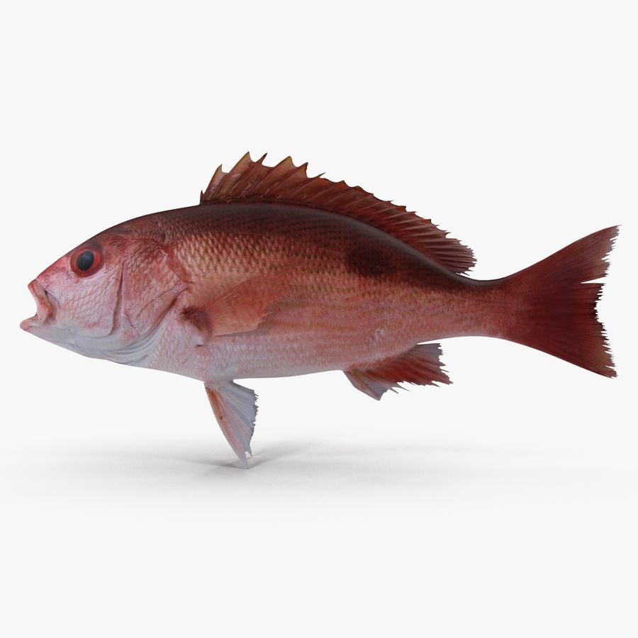 Pacific Red Snapper royalty-free 3d model - Preview no. 1