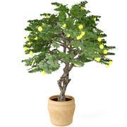 柠檬树 3d model