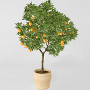 laranjeira 3d model